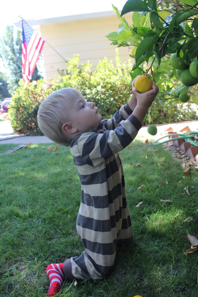 Little Boy was Quick to Notice our First Lemons. Captivating!
