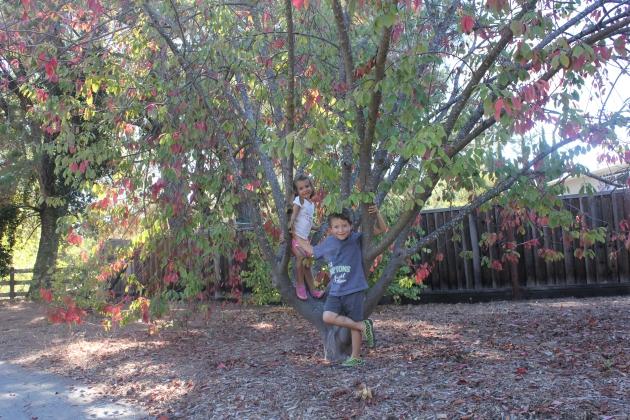 Fall Trees Nature Study