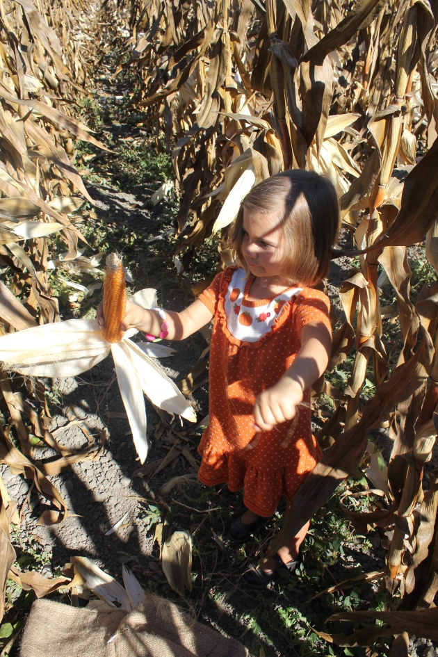 Picking Popcorn at Ardenwood Historic Farm