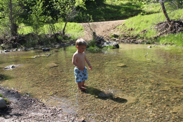 Tadpole Time at Round Valley Creek