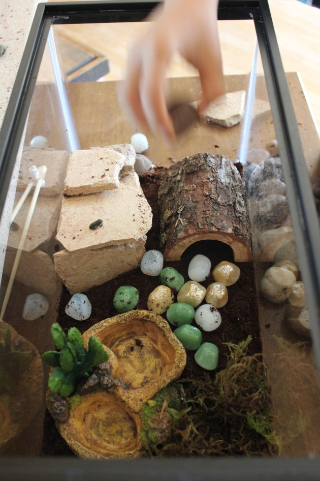 A Terrarium for Frog (Who is actually a Toad)