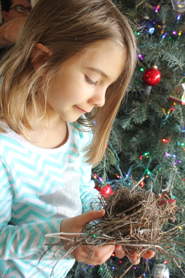 We found a birds nest in our Christmas tree