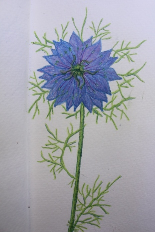 Nature Journal Nigella